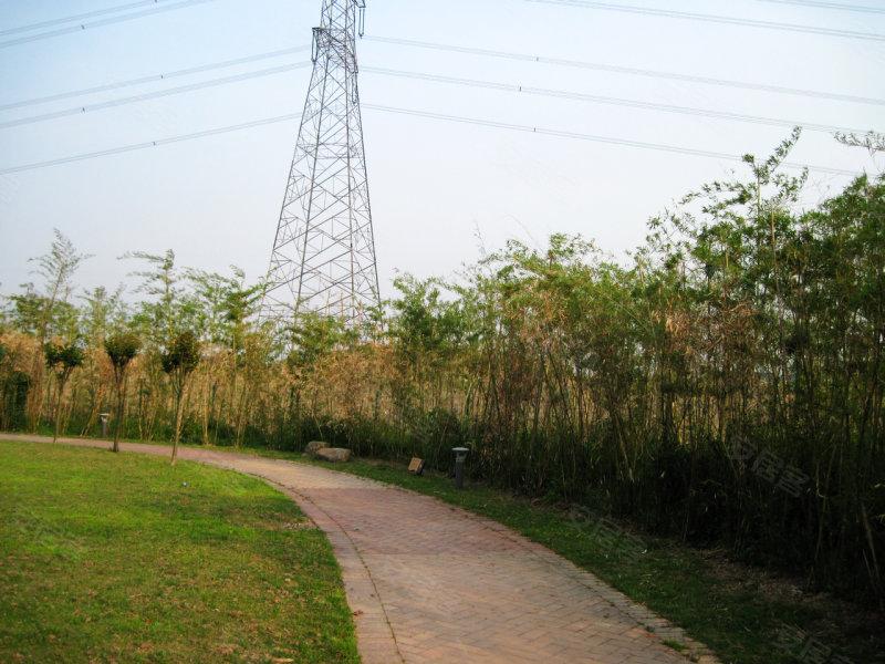 竹子的叶简笔画画法图片大全